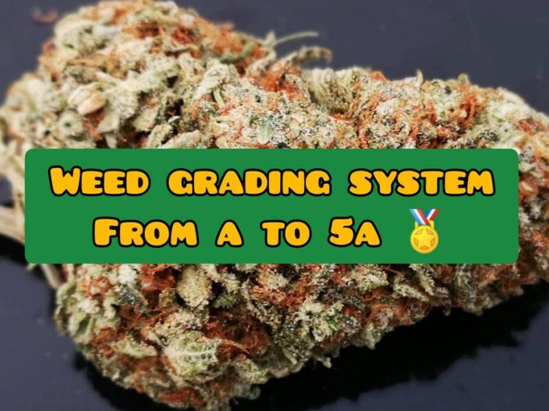 Cannabis-Weed-grading-system-AAAA