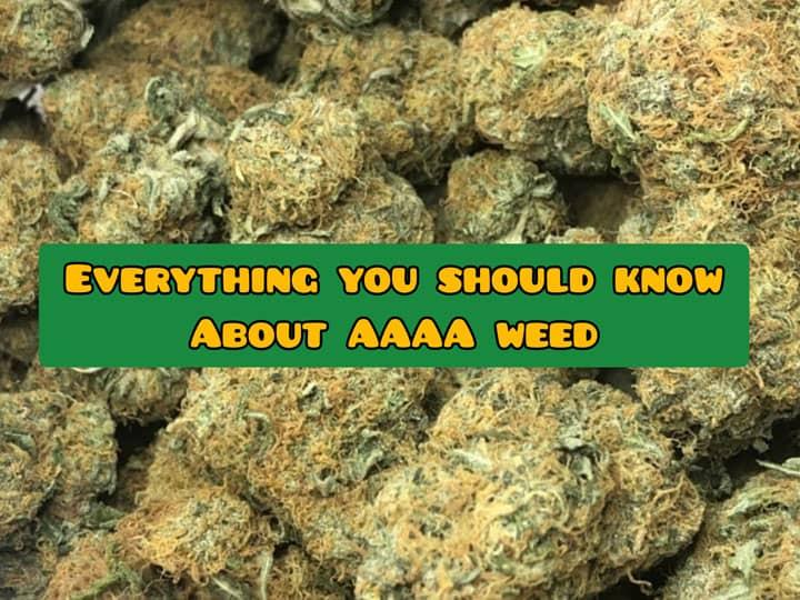 AAAA weed guide canada