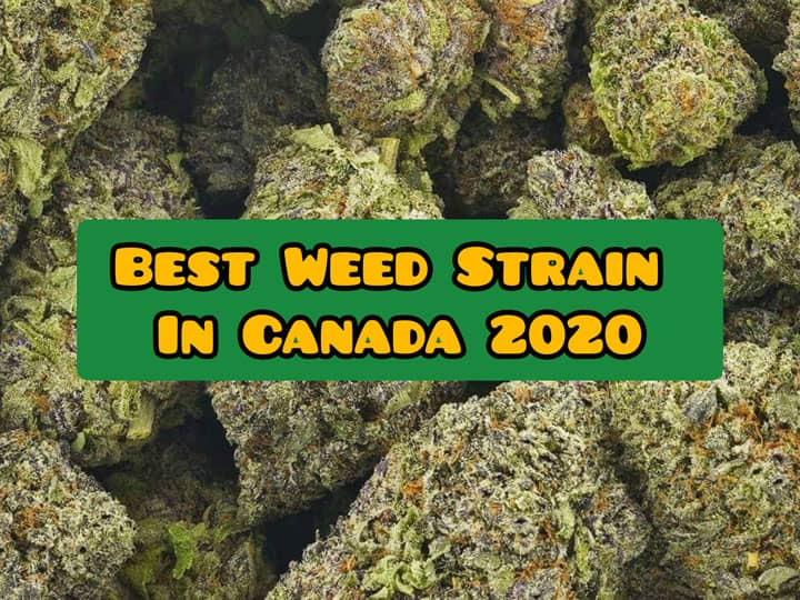best weed strain canada