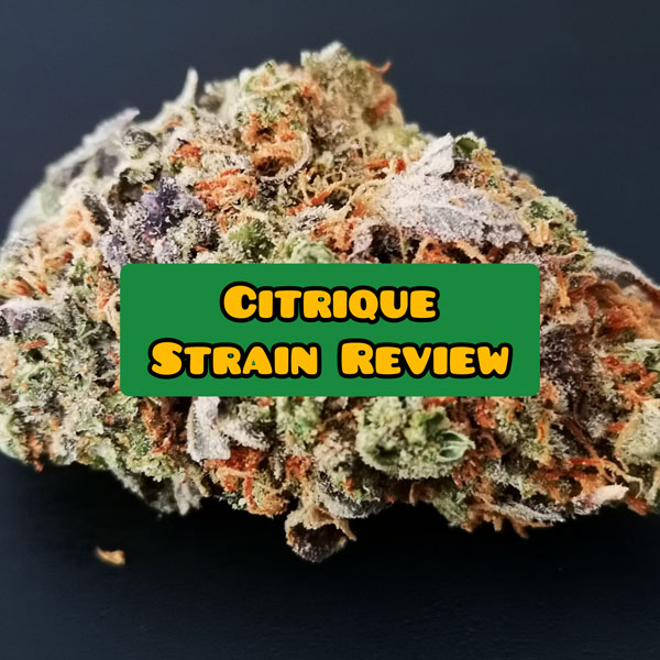 citrique weed review and info