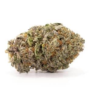 gods green crack best weed hybrid