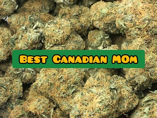 best MOM canada