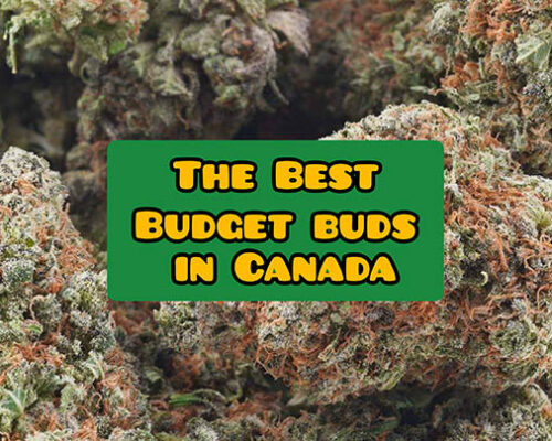 best budget buds canada